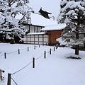 写真: 金閣寺10