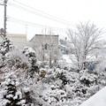 Photos: 朝起きると!
