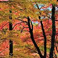 Photos: 箱根 長安寺 紅葉
