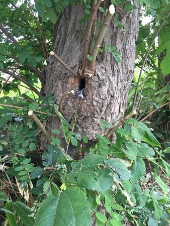 コムクドリの巣