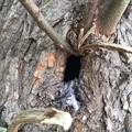 Photos: コムクドリの巣3