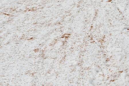 ベニヒワが食べた白樺の種の跡
