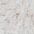 写真: ベニヒワが食べた白樺の種の跡