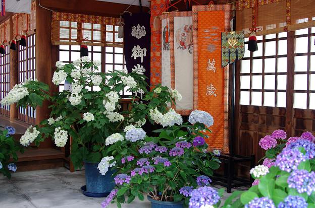 紫陽花神社(5)