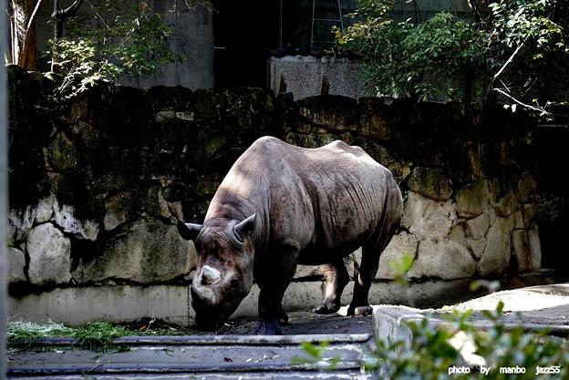上野動物園  サイ