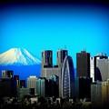 Photos: 文京シビック展望室からの富士山