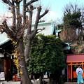 Photos: 小日向神社