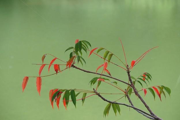 写真: 忍び寄る秋