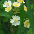 花の1コマ