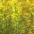 紫陽花の枝から覗く春