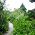 The Path 8-21-14