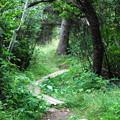 Trail 3 8-21-14