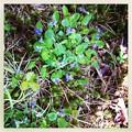 Photos: Violets are Blue 5-31-14