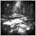 North Loop Trail 10-05-14