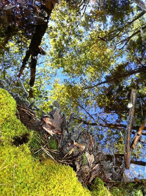 Photos: In the Woods II 5-31-14