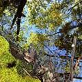写真: In the Woods II 5-31-14