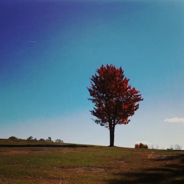 Maple Tree 10-13-14