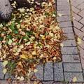 Autumn Potpourri 10-18-14