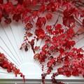 Photos: Red on White 10-18-14