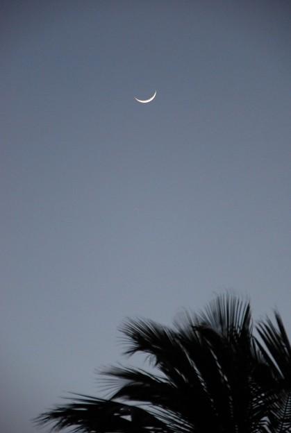 Windy Moon 4-9-16