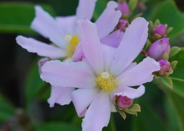 Rose Cactus 4-21-16