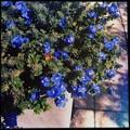 Blue My Mind 4-21-16