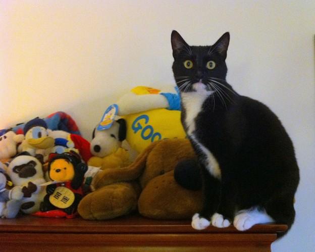 Stuffed Animals 5-24-16