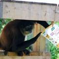 Photos: Black Handed Spider Monkey and Kashi 6-4-16