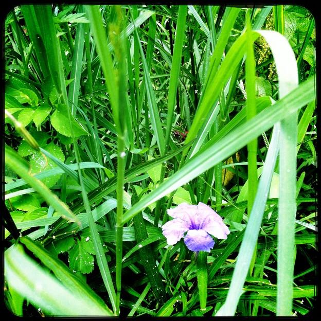 Flower 6-18-16