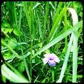 写真: Flower 6-18-16