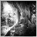 Photos: Under the Sacred Fig 6-12-16