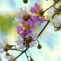 Photos: Queen's Flower 8-21-16