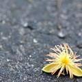 Fallen Foxtail Palm Flower 10-4-16