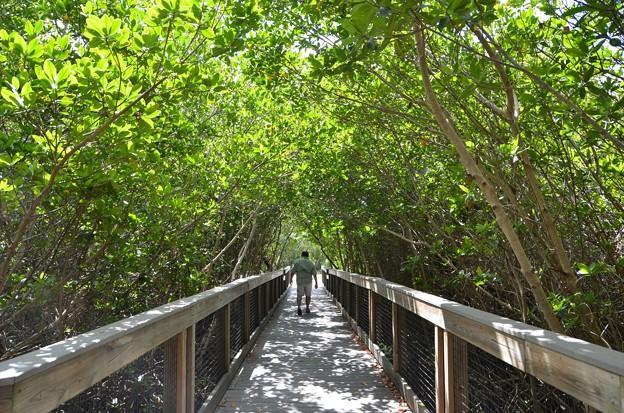 Mangrove Tunnel 10-18-16