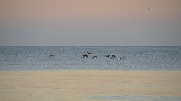 Pelicans 11-26-16