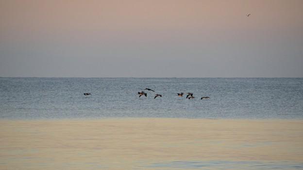 Photos: Pelicans 11-26-16