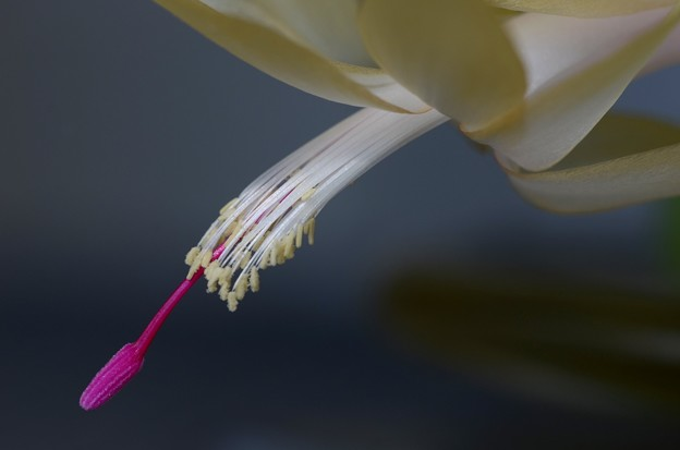 The Stamens and a Pistil 12-22-16