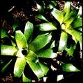 写真: Green 1-28-17
