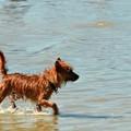 A Wet Puppy 2-4-17