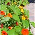 写真: Edible Garden 2-20-17
