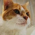 Good Kitty...