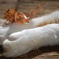 Autumn Paws