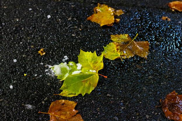 秋にかかる冬