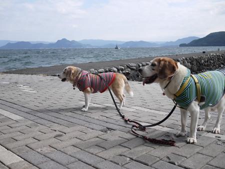 風が強いけど涼しいから歩きやすいや!