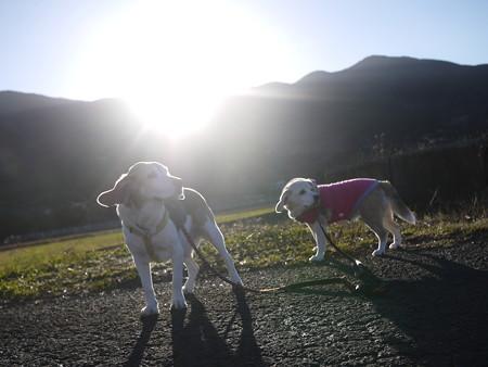 今朝はとっても暖かった!