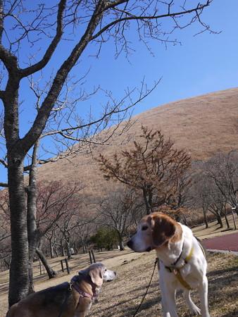 桜が満開の時はこの公園はめちゃくちゃ綺麗で人も多いです