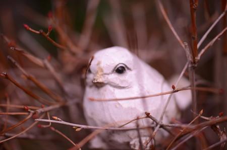 あら!こんな所に可愛い小鳥さんが!