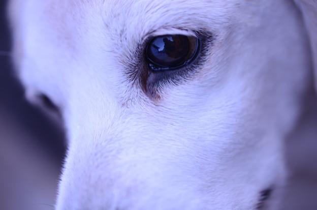 写真: この瞳に何人ドッキュン胸を打たれたのだろう