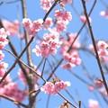 写真: 梅の花~鈴鹿の森庭園