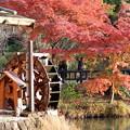 写真: 東山植物園
